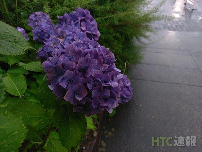 htv32_camera_hydrangea2
